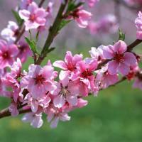 Primavera activa no Alentejo
